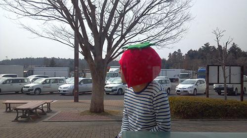 トマトの妖精3