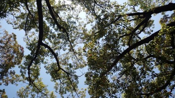 万博記念公園の木陰