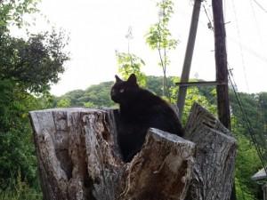 旗振山の猫