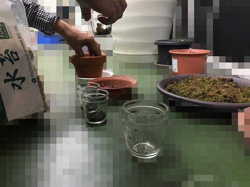 モロゾフの容器にモウセンゴケを入れる